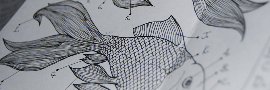 Technical drawing of fish anatomy for Experiments